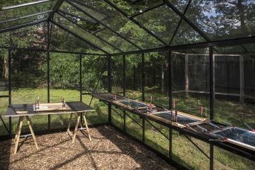 glasshouse for illuminating the anthotype prints